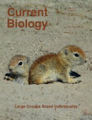 Social Group Size Predicts the Evolution of Individuality - UCLA ...