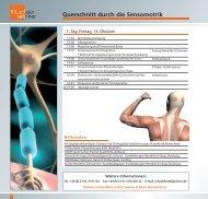 Querschnitt durch die Sensomotrik - Schein