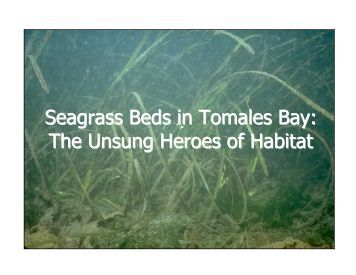 Seagrass Beds in Tomales Bay - Gulf of the Farallones National ...