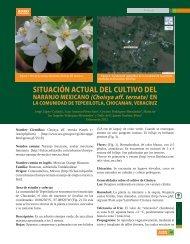 Situación actual del cultivo de naranjo mexicano - Colposcordoba.mx