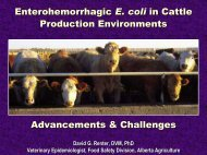 Enterohemorrhagic E. coli in Cattle Production Environments