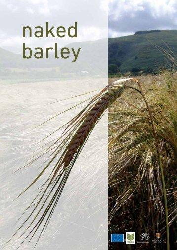 What is naked barley? - Barley - Bangor University