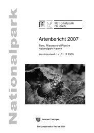 Artenbericht 2007 - Nationalpark Hainich