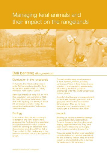 Managing feral animals and their impact on the rangelands