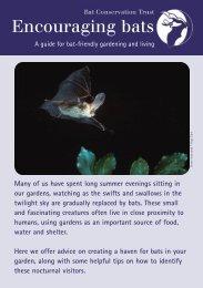 Encouraging Bats - Year of the Bat