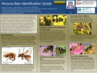 Arizona Bee Identification Guide - Pollinator Partnership
