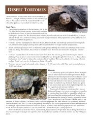 Tortoise fact sheet - Arizona Sierra Club