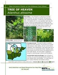 GÖTTERBAUM 250 Samen Ailanthus Altissima
