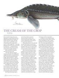 The Cream of the Crop - Mote Marine Laboratory