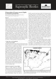 Conservation of Lucanus cervus in Spain