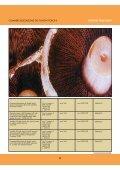 Commercializzazione dei funghi - UNPISI - Page 4
