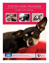 Foster Care Program Puppy Volunteer Manual - San Francisco SPCA