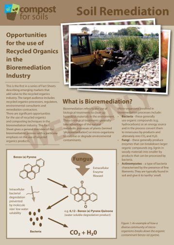 What is Bioremediation? - Compost for Soils