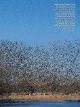 Birds & Birding 4(4) - Page 2