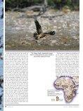 Birds & Birding 4(4) - Page 7