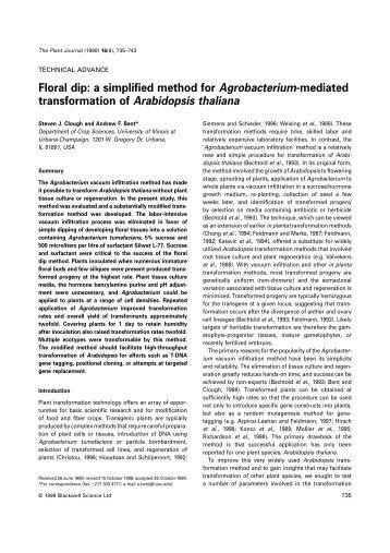 transformation of Arabidopsis thaliana