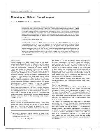 Cracking of Golden Russet apples