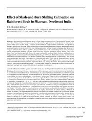 Effect of Slash-and-Burn Shifting Cultivation on Rainforest Birds in ...
