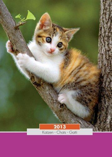 Katzen - Chats - Gatti