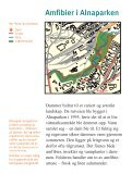 Amfibier i Alnaparken - Page 2