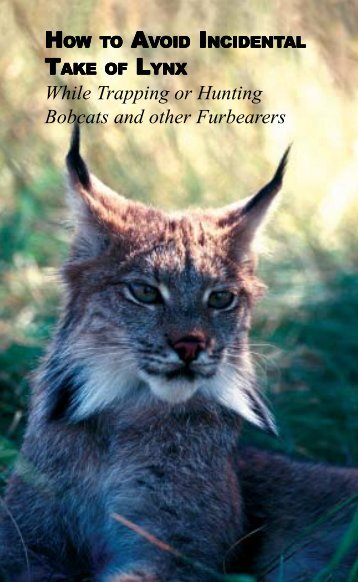 Lynx avoidance [PDF] - Wisconsin Department of Natural Resources