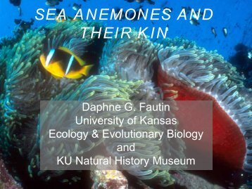 sea anemones and their kin - Natural History Museum - University of ...