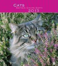 Katzen Chats Gatti