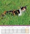 Katzen Chats Gatti - Page 5