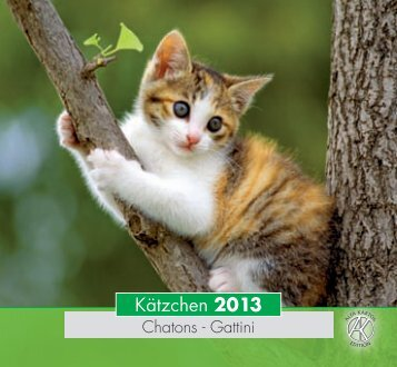 Kätzchen 2013