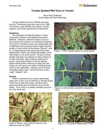 an overview of tomato spotted wilt virus Plant viruses online d00645 em(40)_vi:tswsrs gb(84)_vi:tswsrs tomato spotted wilt virus s rna segment, complete sequence 3/91 2,916bp d00821 em.