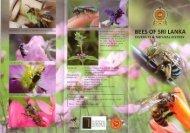 Á plant-ättractive to pollen bees