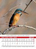 Birds 2013 - Page 3