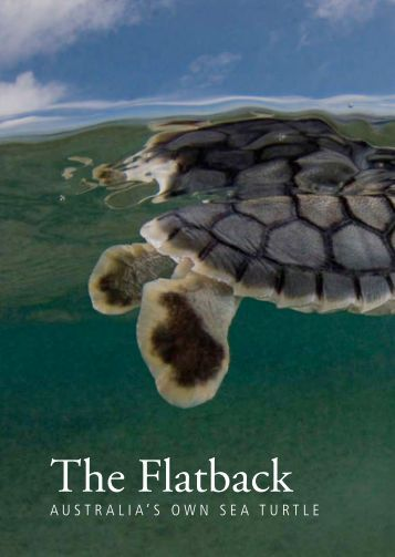 australia's own sea turtle - The State of the World's Sea Turtles