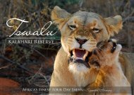 Africa's Finest 4 Day Safari - Suggested Itinerary - Tswalu Kalahari