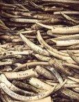 ivory-survey - Page 6