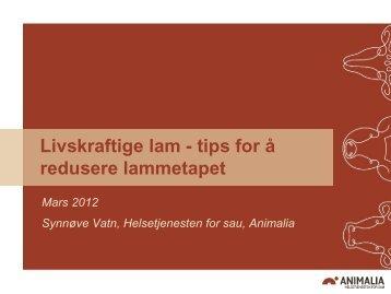 Livskraftige lam - Norsk Sau og Geit