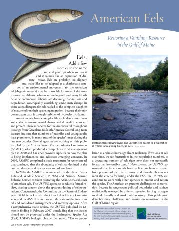 American Eels - New Hampshire Fish and Game Department
