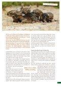 broschure-jungtiere-pdf - Tierhilfe Ostholstein - Seite 3
