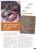 broschure-jungtiere-pdf - Tierhilfe Ostholstein - Seite 7