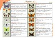 Observatoire des papillons des jardins : Fiche - Kiagi.org