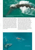 samson - Fly Angler Australia - Page 7