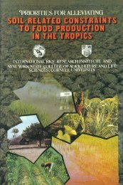 priorities for alleviating - IRRI books - International Rice Research ...