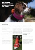 waterproof, canadian-made dog couture. quality since 1999 - Page 2