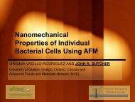nanomechanical properties of individual bacterial cells
