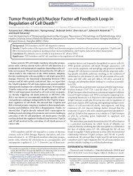 Tumor Protein p63/Nuclear Factor B Feedback Loop in Regulation ...