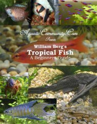 Tropical Fish For Beginners - AC Tropical Fish