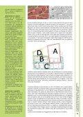 Anno IV - Numero 2 - Dicembre 2010 - Comune di Pieve Tesino - Page 5