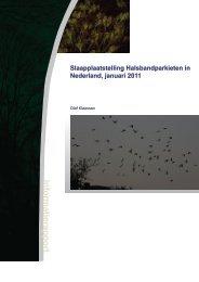 Slaapplaatstelling Halsbandparkieten in Nederland, januari 2011