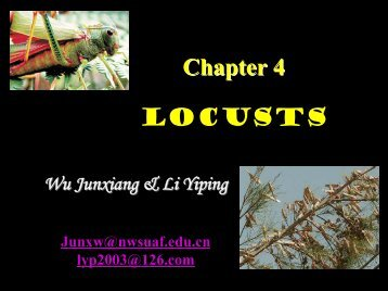Chapter 4 LOCUSTS