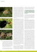 Dossier tècnic núm. 36: Cítrics (II). Control de plagues, en ... - RuralCat - Page 4